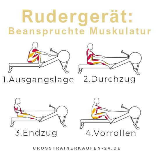 Rudergerät-beanspruchte Muskeln