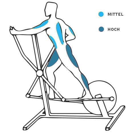 Crosstrainer - welche Muskelgruppen werden trainiert